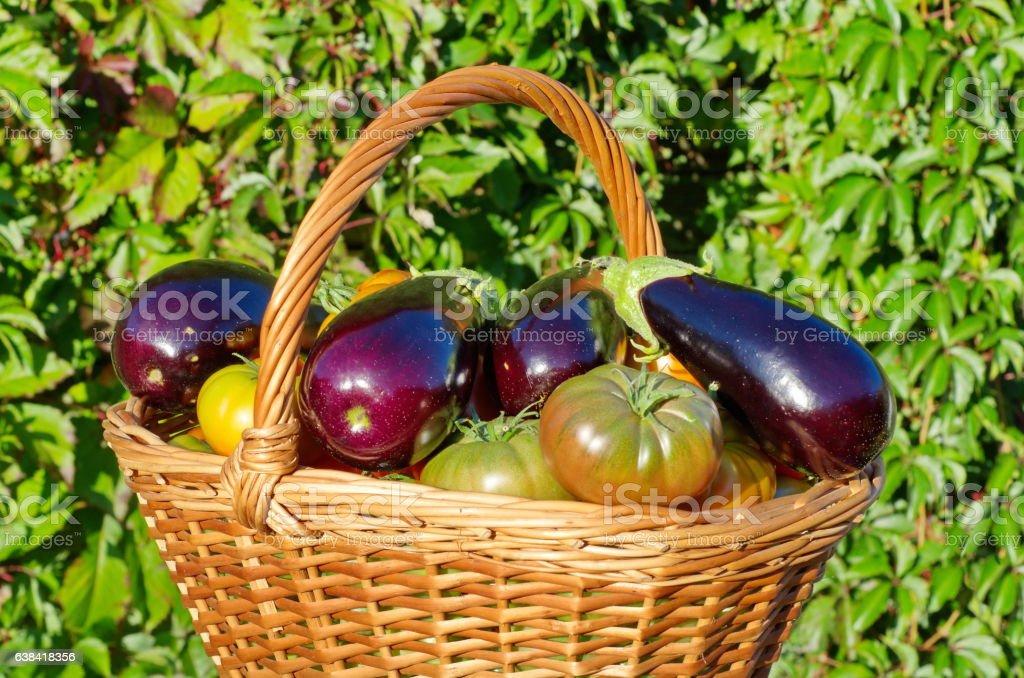 Basket of eggplants and tomatoes outdoors stock photo