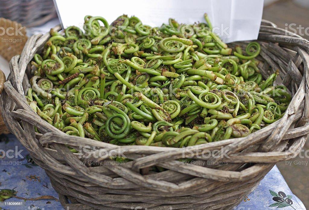 Basket of Fiddleheads stock photo