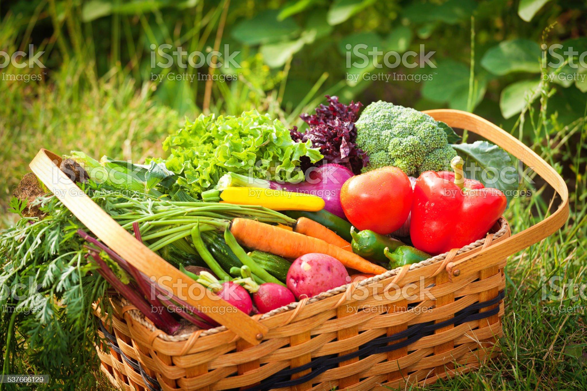 Kosz świeżych Ogród produkcji i warzywa w polu zbiór zdjęć royalty-free