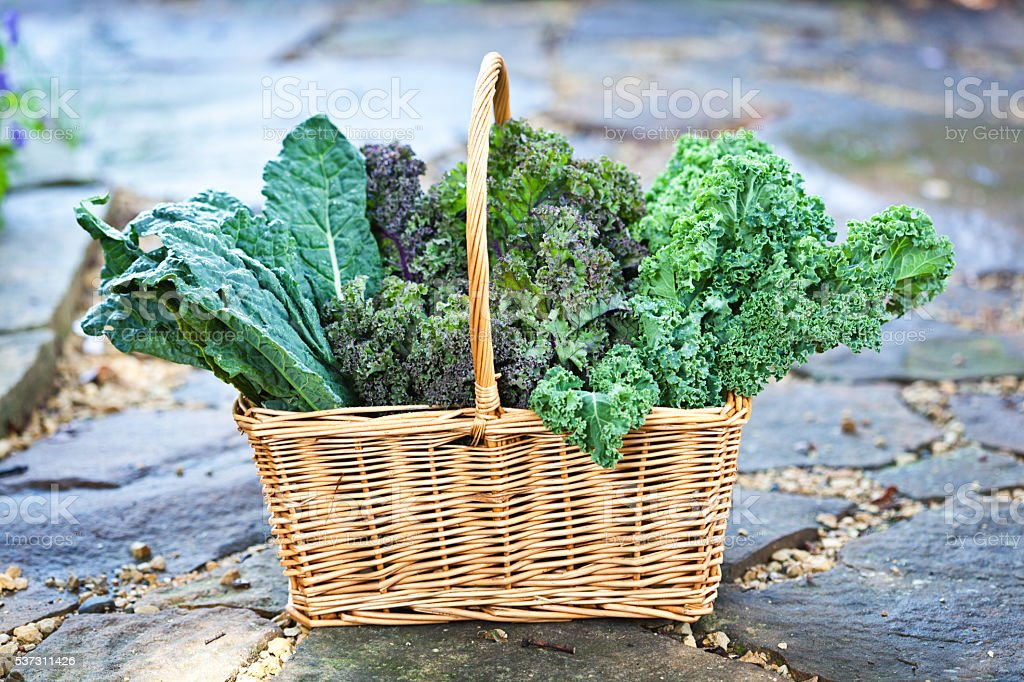Basket of Fresh Kale Vegetable Varieties Harvested from Garden stock photo