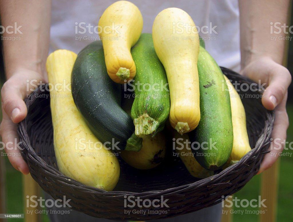 Basket of Fresh Squash stock photo