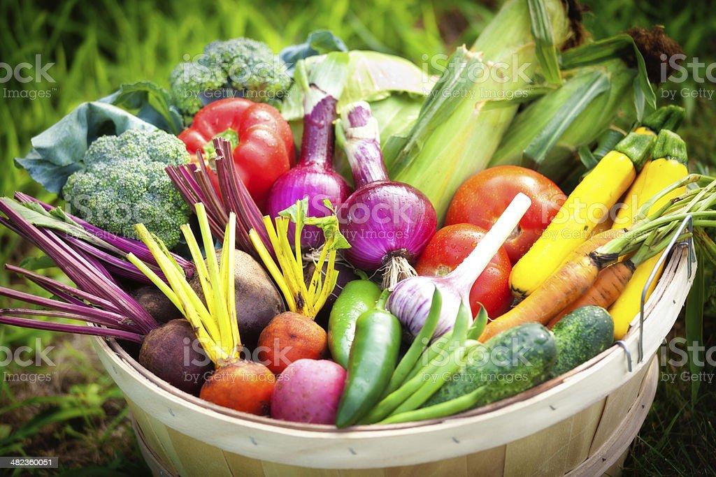 Basket of Fresh Summer Vegetable from the Garden stock photo