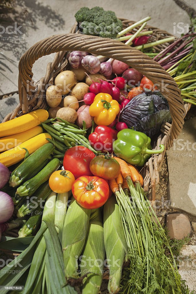 Basket of Fresh Vegetables Harvest from Home Garden Vt stock photo