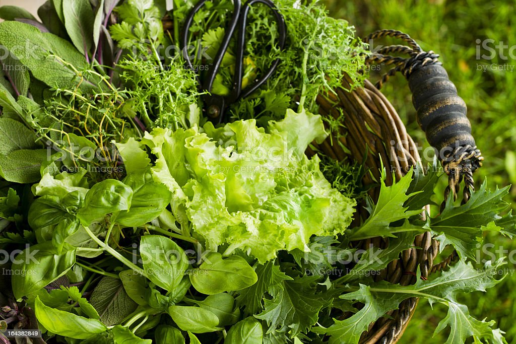 Basket of Freshly Cut Salad and Herbs stock photo