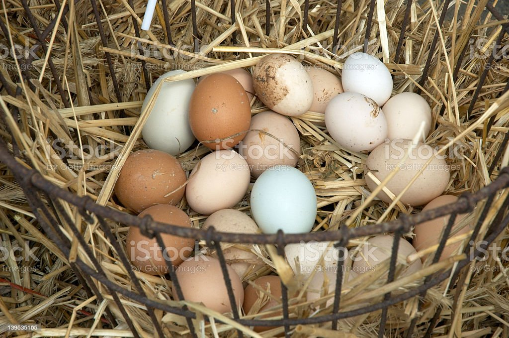 A basket of freshly laid farmhouse eggs in straw royalty-free stock photo