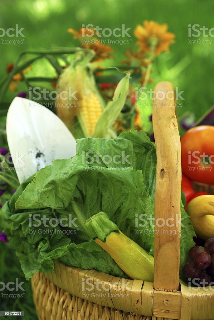 Basket of Garden Vegetables royalty-free stock photo