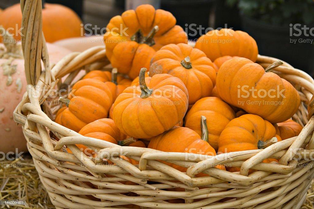 Basket of Pumpkins royalty-free stock photo