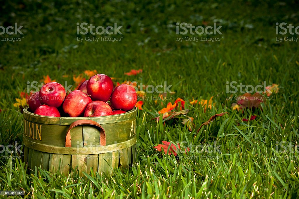 Basket of red apples in the grass stock photo