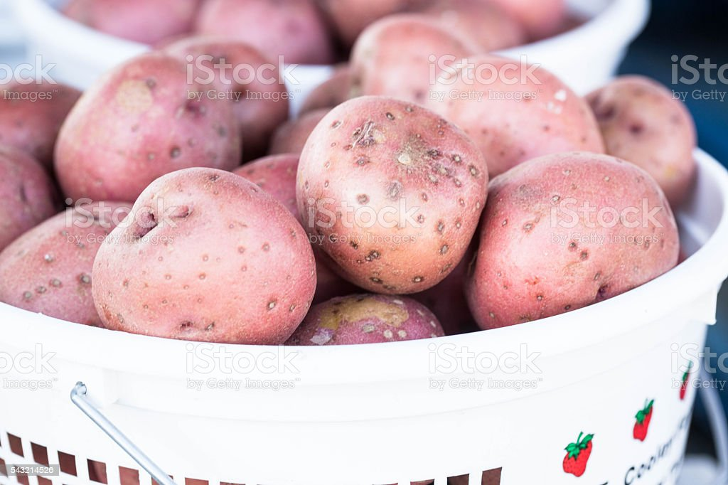 Basket of Red Potatos at Farmers Market stock photo