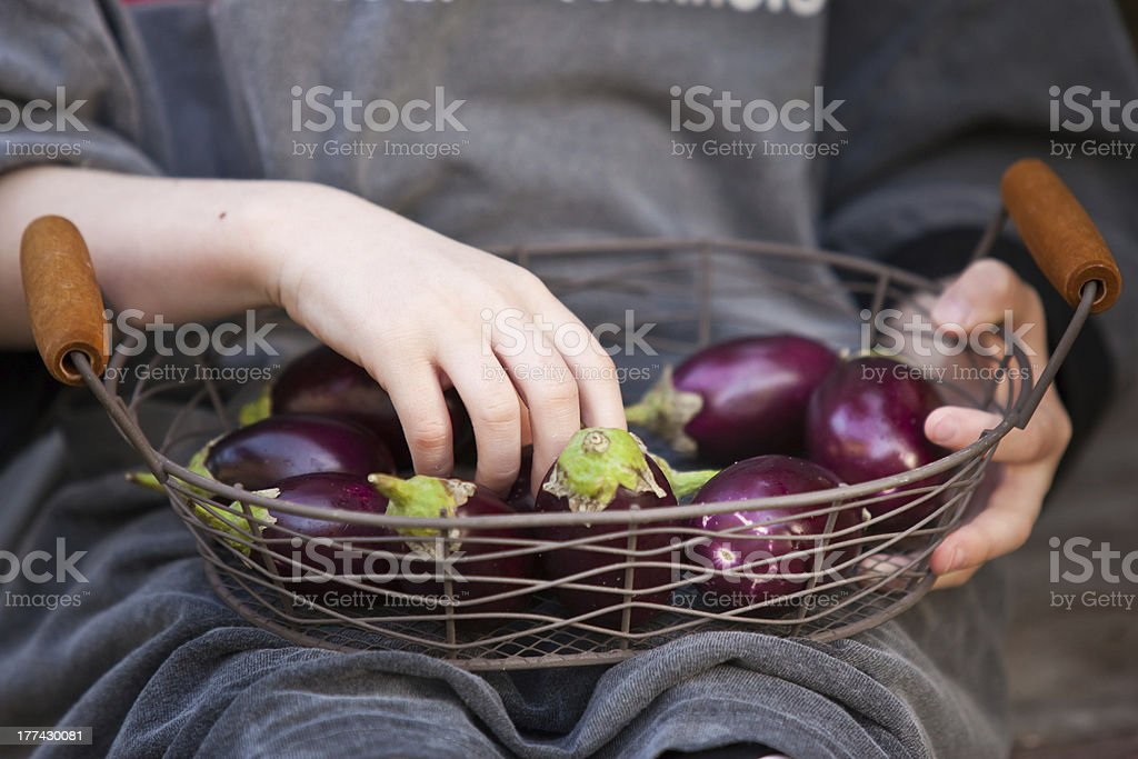 Basket of small eggplants, holding by kid hands royalty-free stock photo