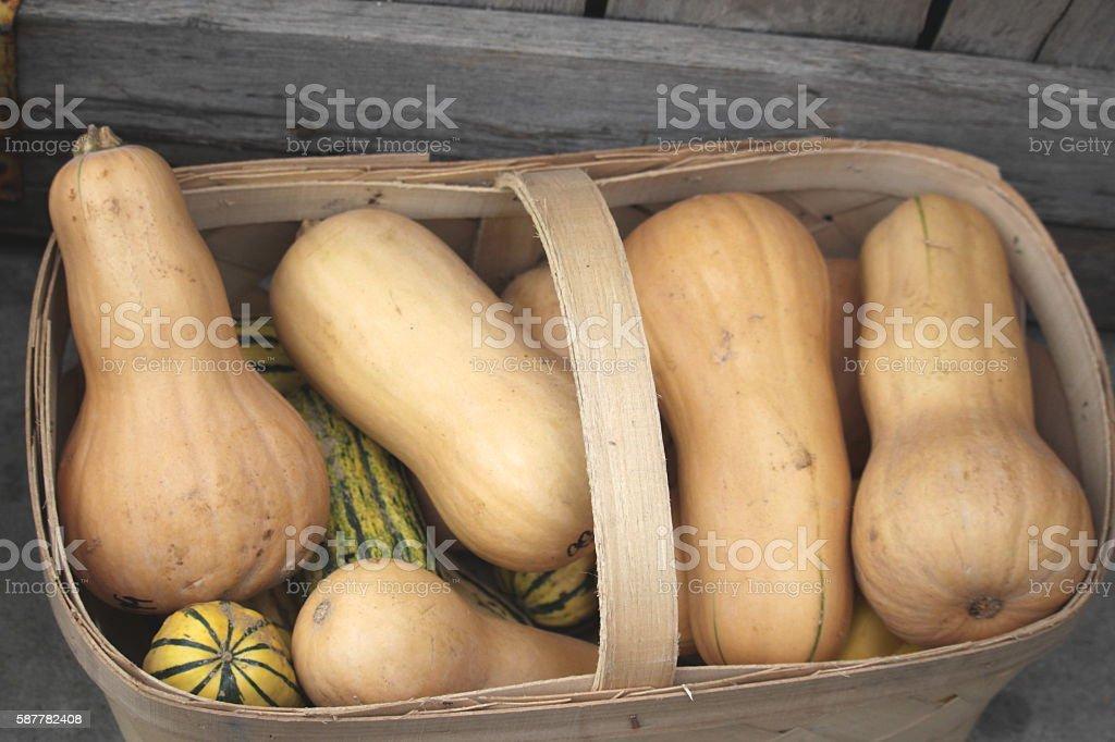 Basket of Squash stock photo