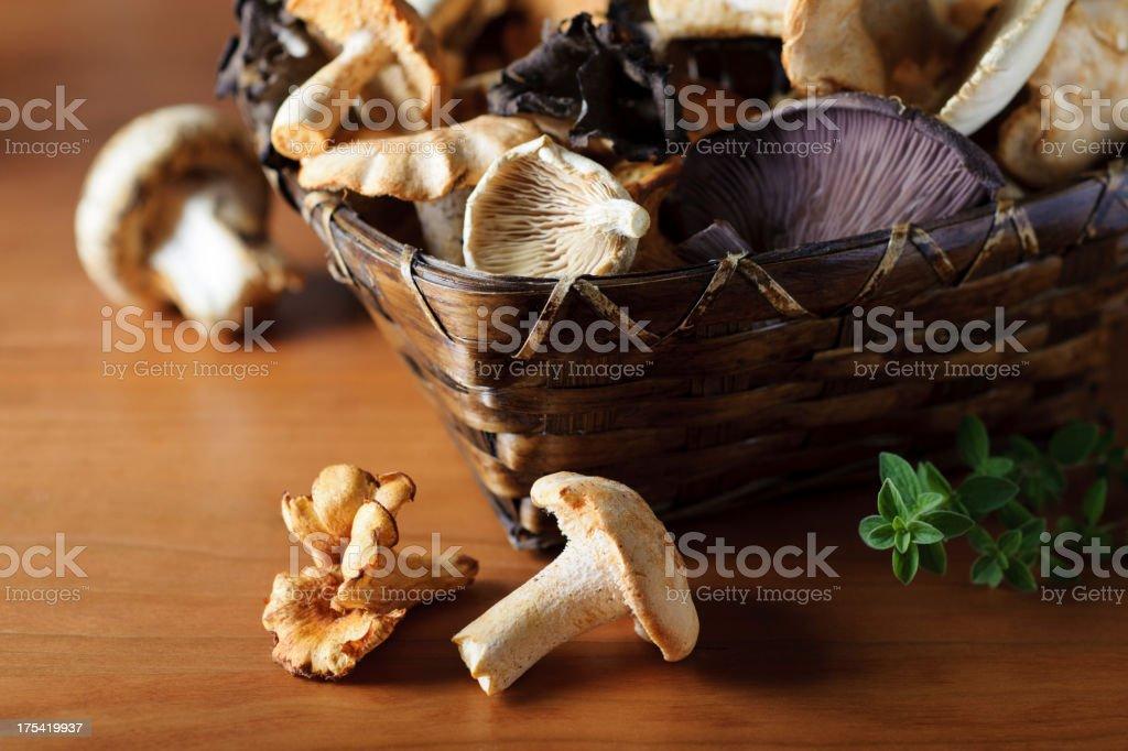 Basket of Wild Mushrooms stock photo