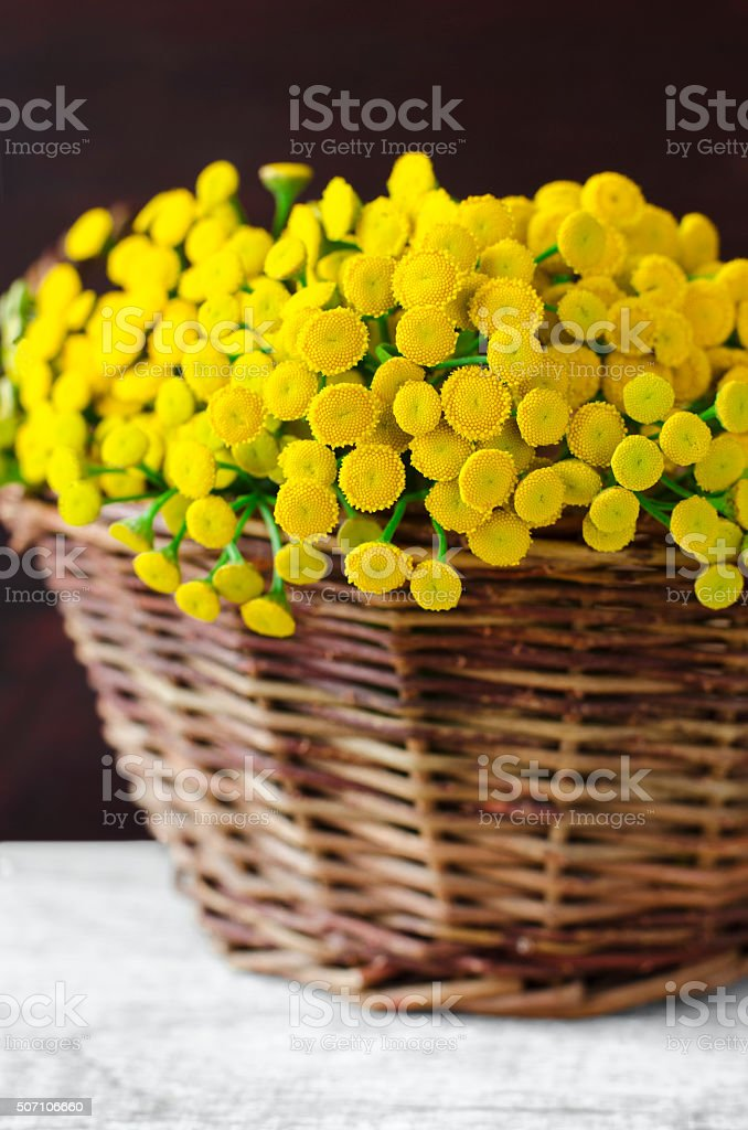 Basket with a bouquet of tansy flowers stock photo