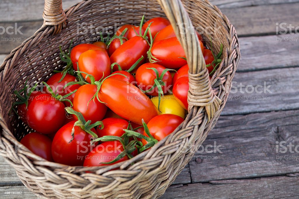 basket with fresh tomatoes stock photo