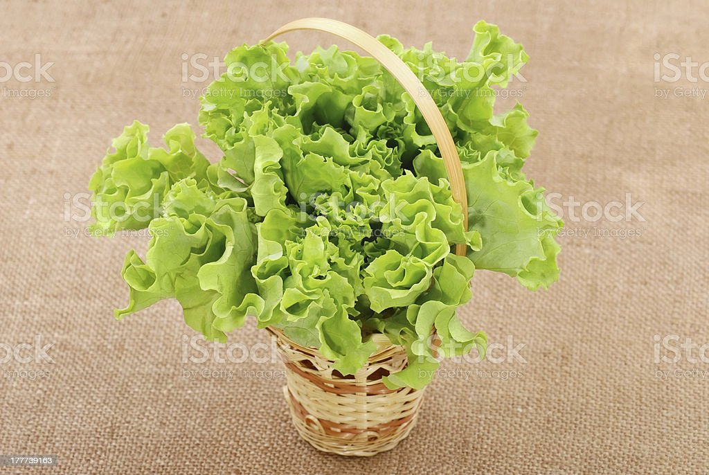 Basket with green lettuce salad royalty-free stock photo