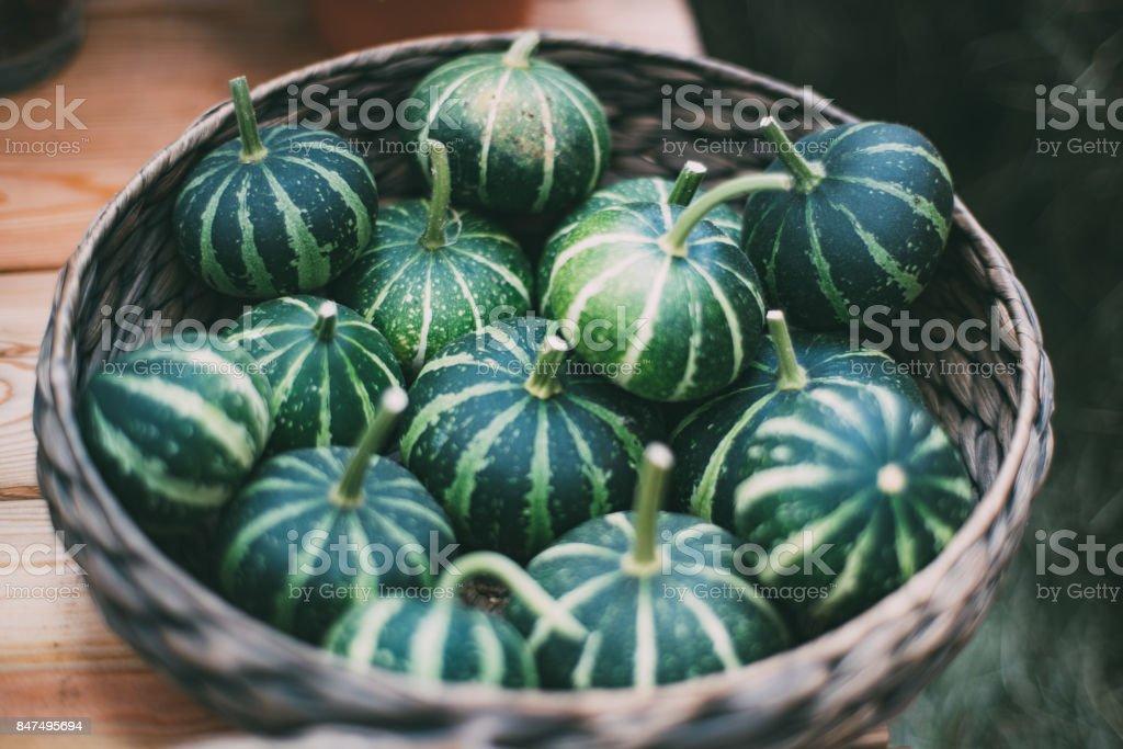 Basket with green stripy pumkins stock photo