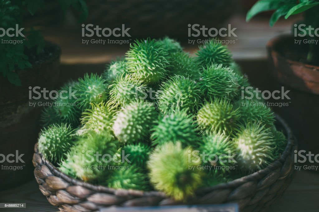 Basket with heap of ripe green Cucúmis angúria stock photo