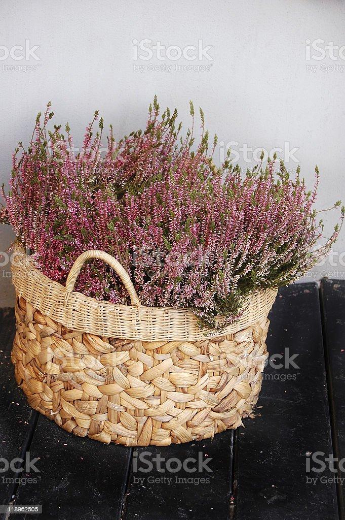 basket with heather stock photo