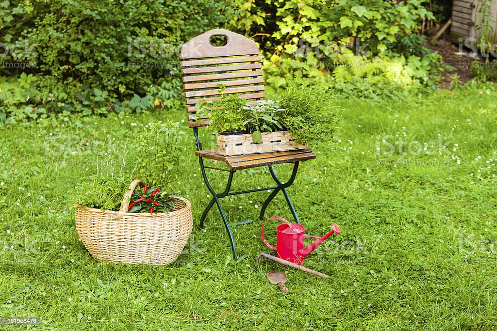basket with herbs in a garden royalty-free stock photo
