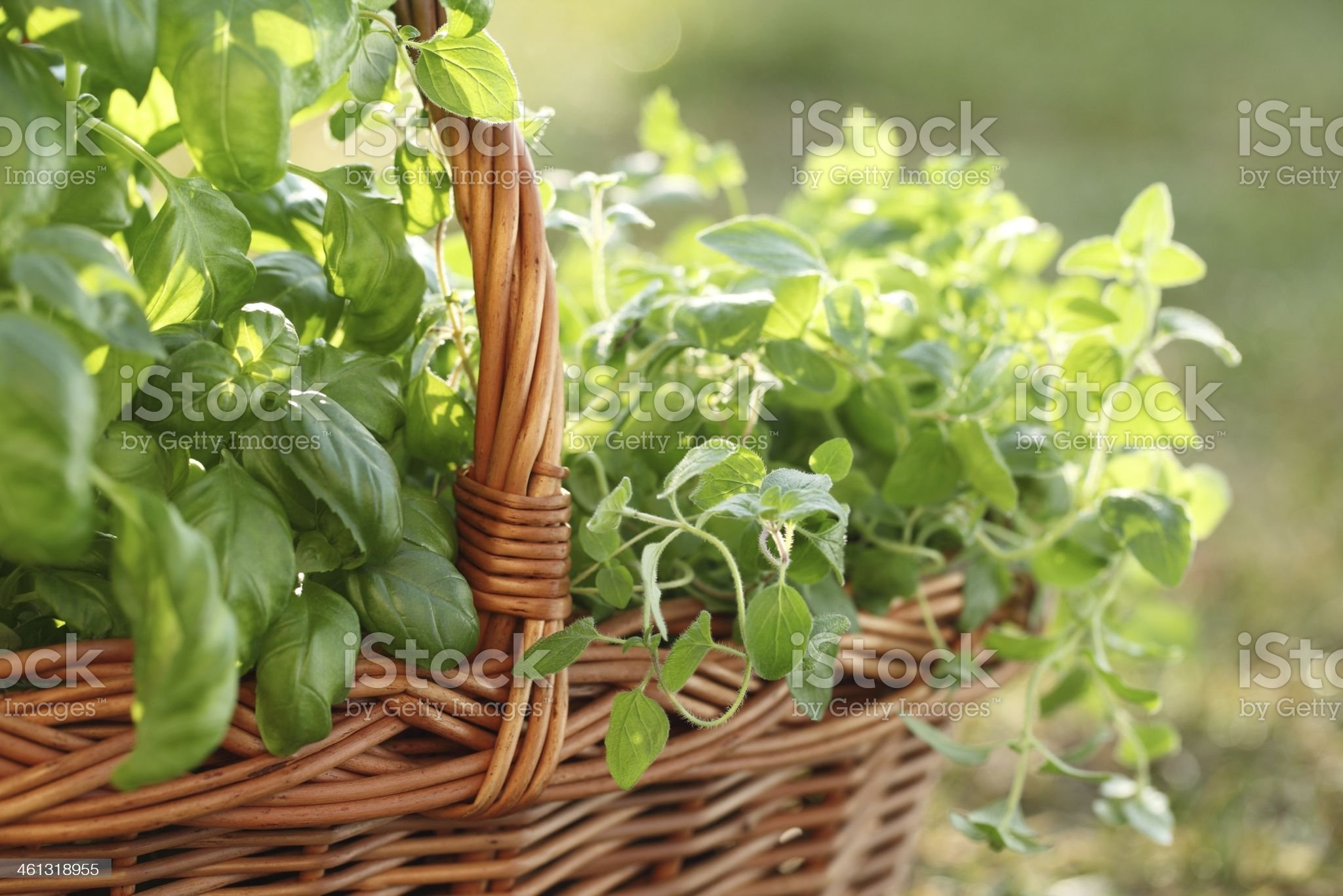 Basket with herbs royalty-free stock photo
