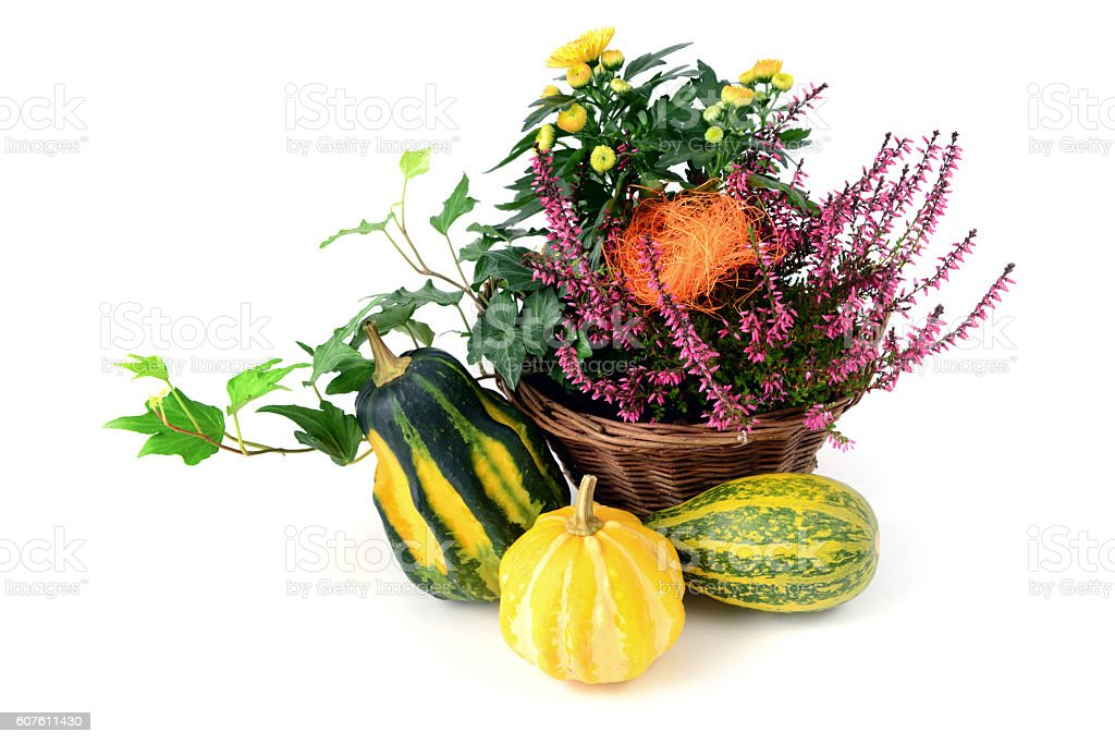 Basket with mini pumpkins, heather and aster flowers stock photo