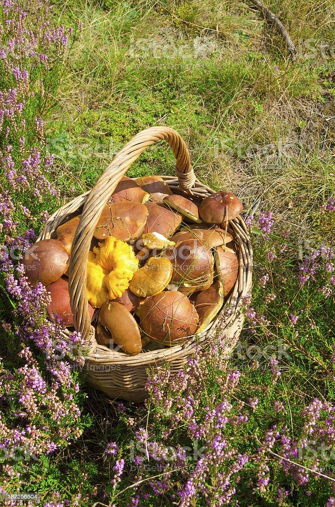 basket with mushrooms royalty-free stock photo