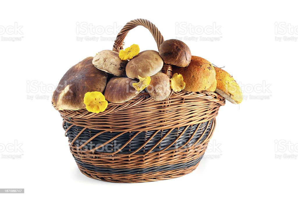 basket with penny bun and chanterelle mushroom stock photo