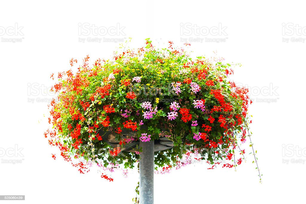 Basket with red and pink flowers, white background, copy space stock photo