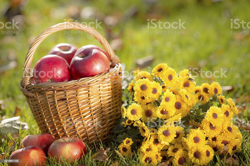Basket with red apples in autumn royalty-free stock photo