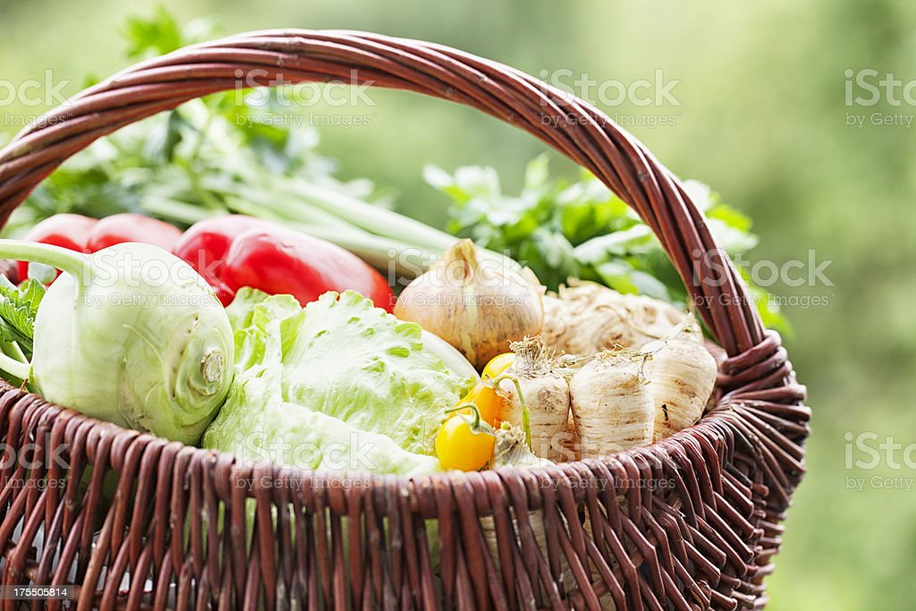 basket with vegetable harvest freshness from garden royalty-free stock photo