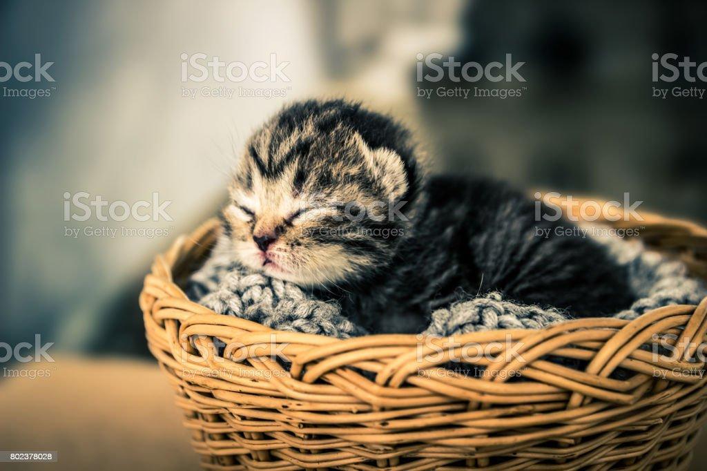 Basket with young kitten. Sleeping kitten. Pets. stock photo