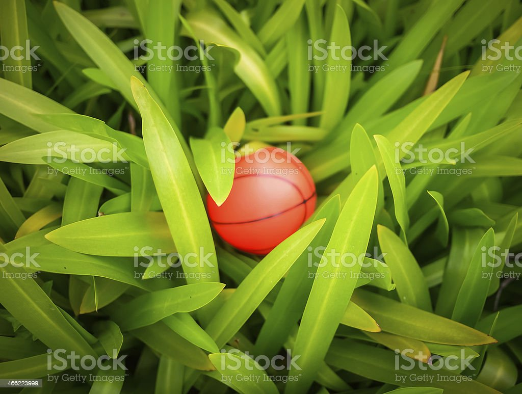 Basketball surrounded by green leaves royalty-free stock photo