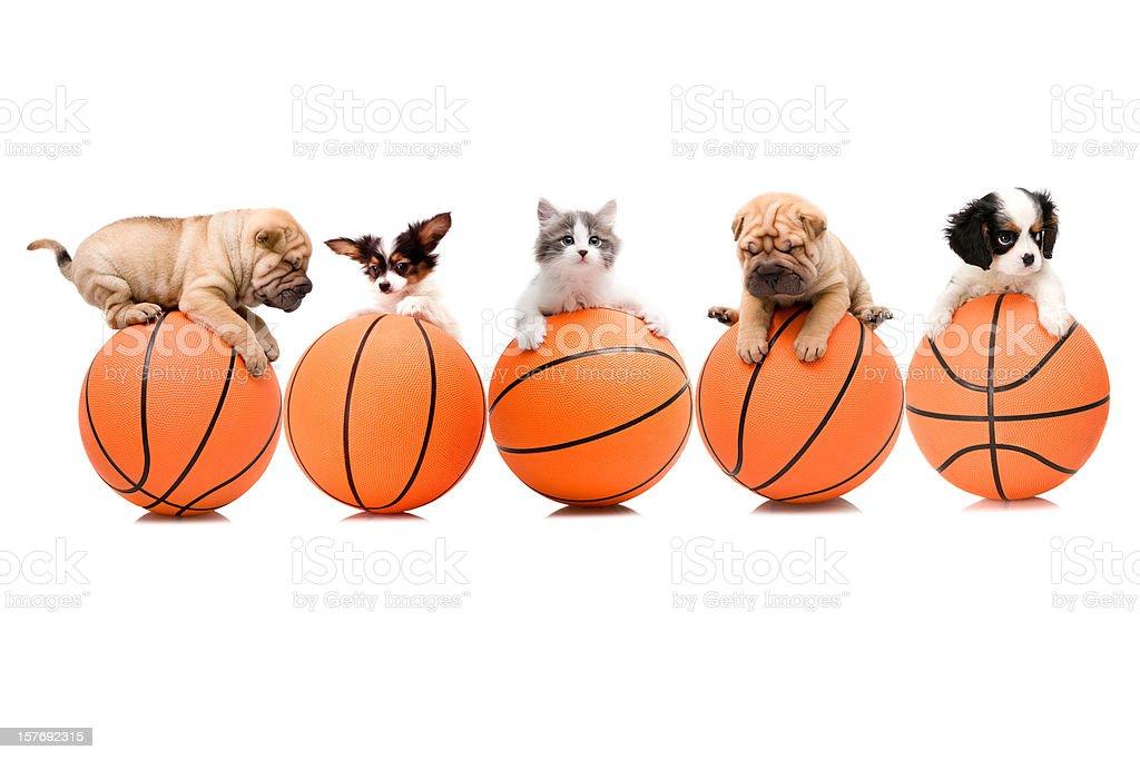 basketball team stock photo