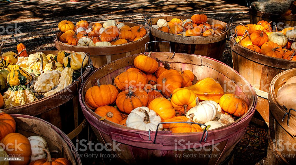 Baskets full of autumn gourds stock photo