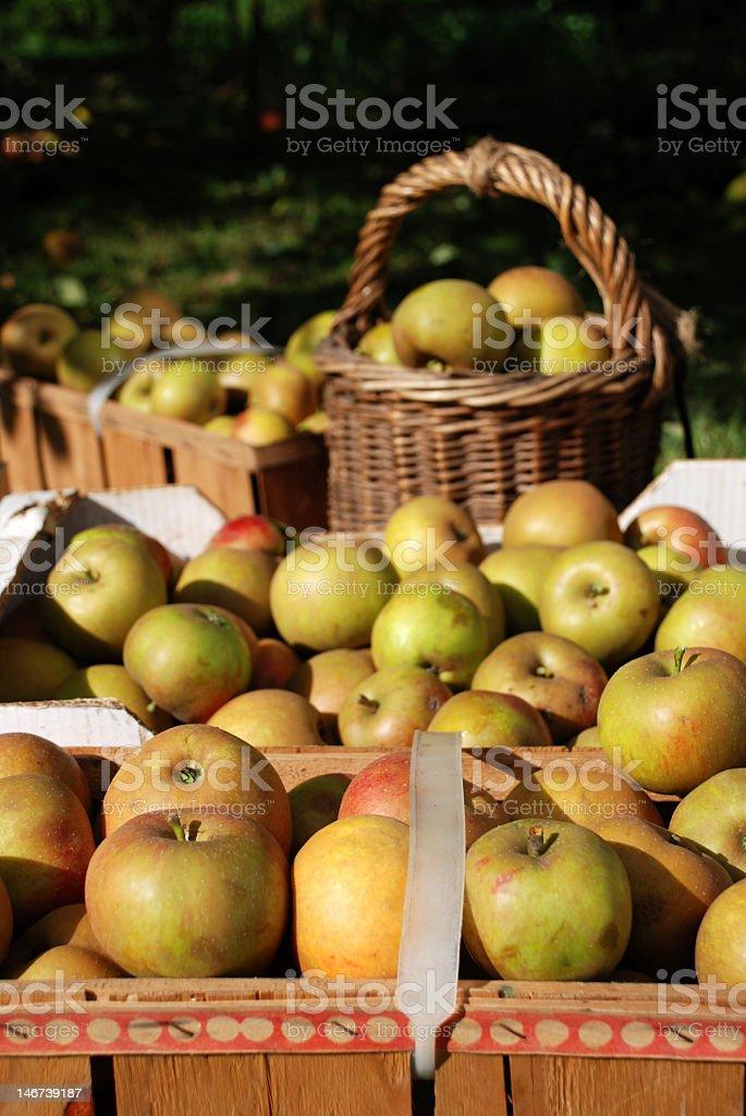 Cestas de manzana en el otoño de sol foto de stock libre de derechos
