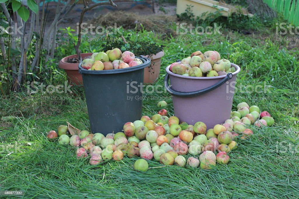 Baskets of apples stock photo