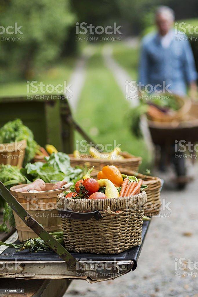 Baskets Of Harvested Vegetables In Garden. stock photo