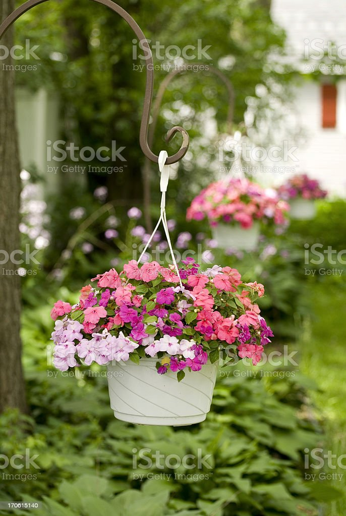 Baskets of Impatiens stock photo