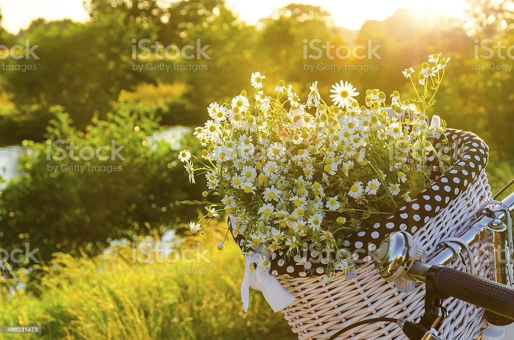 Baskets with daisies at sunset stock photo