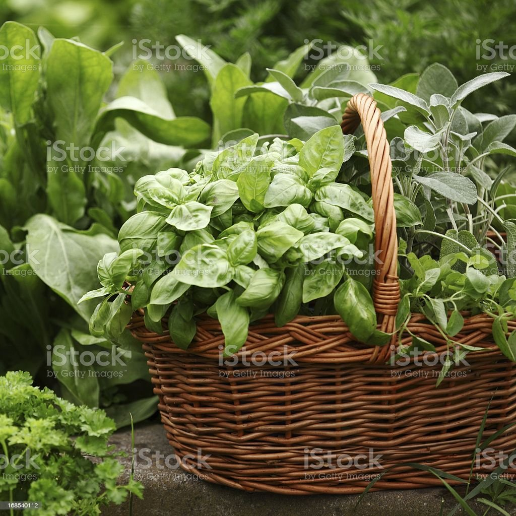 Baskets with herbs stock photo