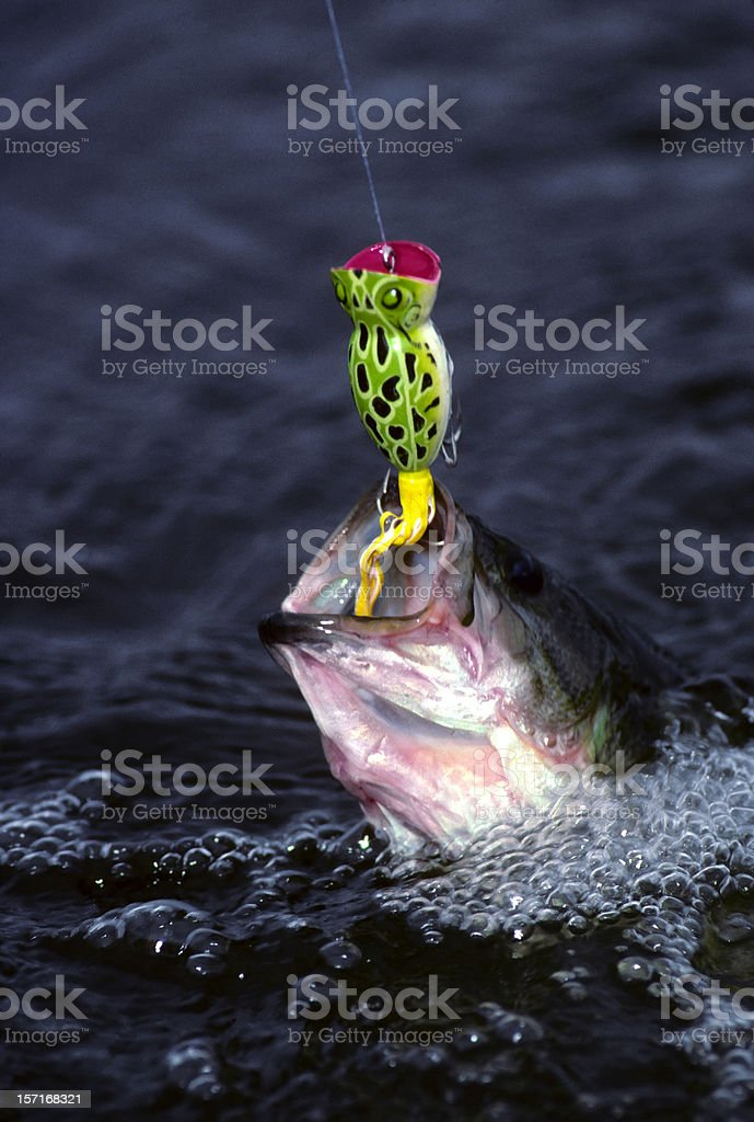 bass and popper lure royalty-free stock photo