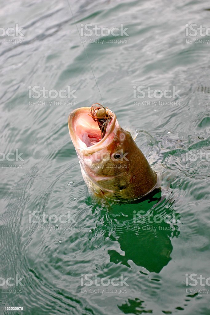 bass fishing royalty-free stock photo