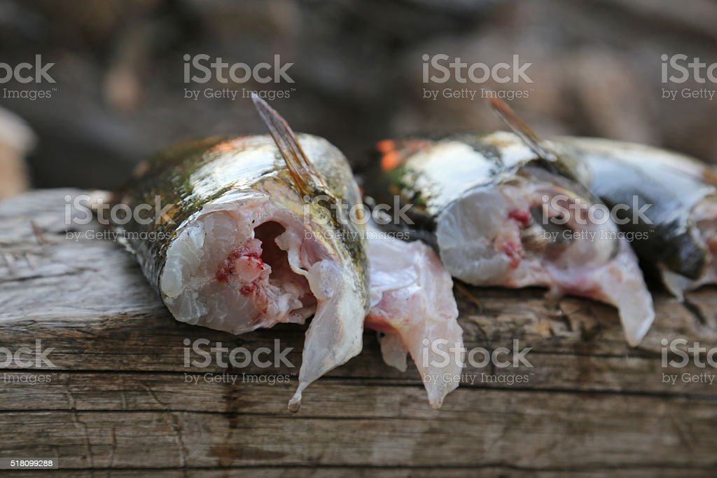 Bass Meat stock photo