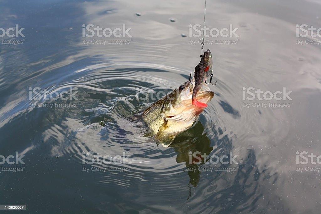 bass stock photo