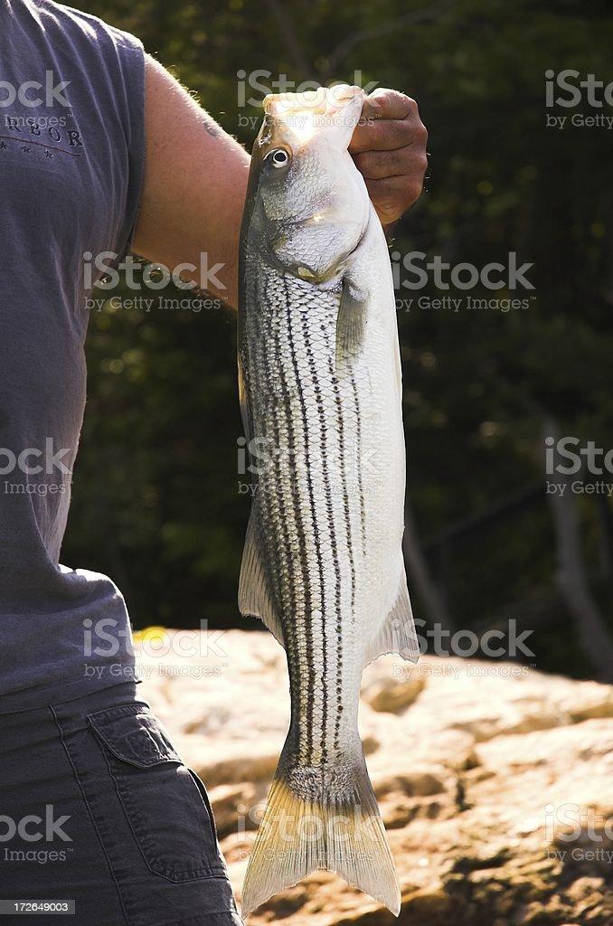 bass royalty-free stock photo