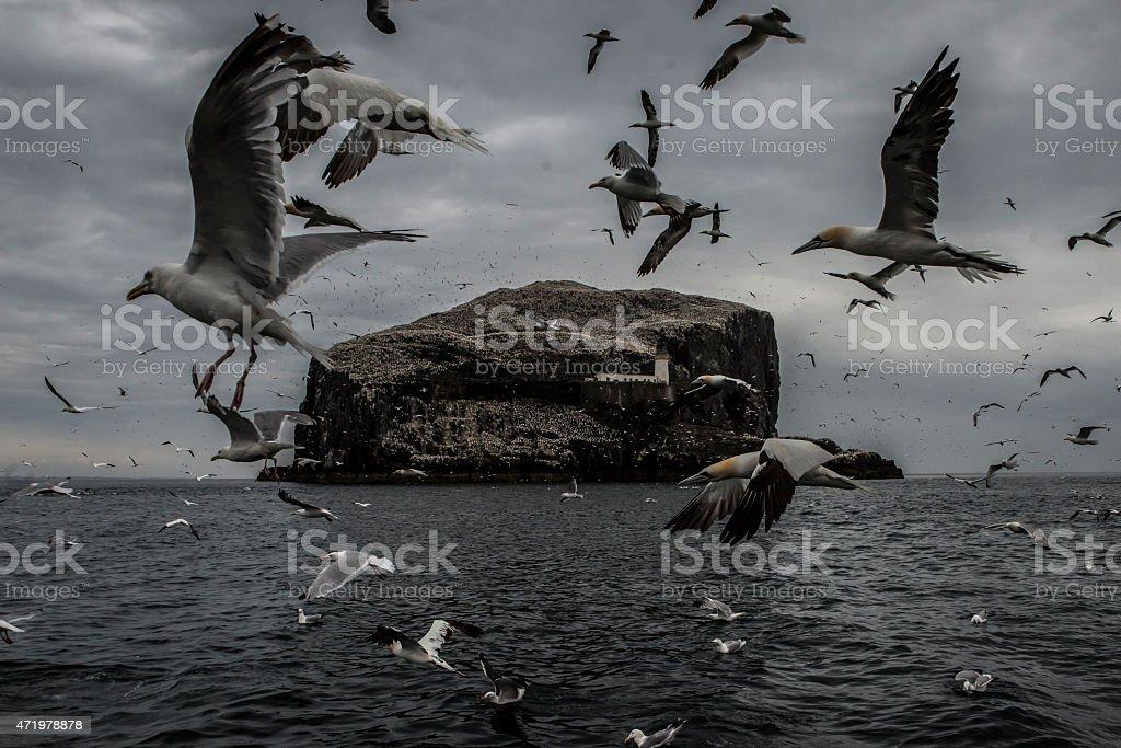 Bass rock stock photo