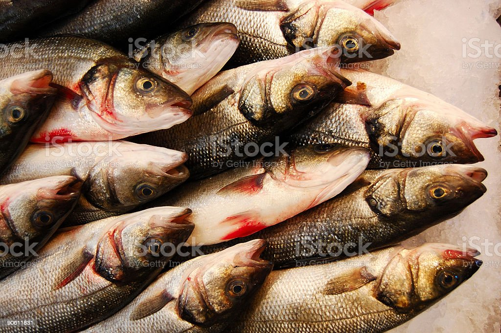 Basses in a Showcase of a Fish Market. royalty-free stock photo