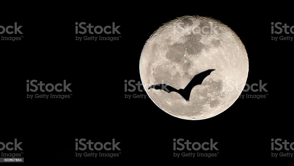 Bat and  moon stock photo