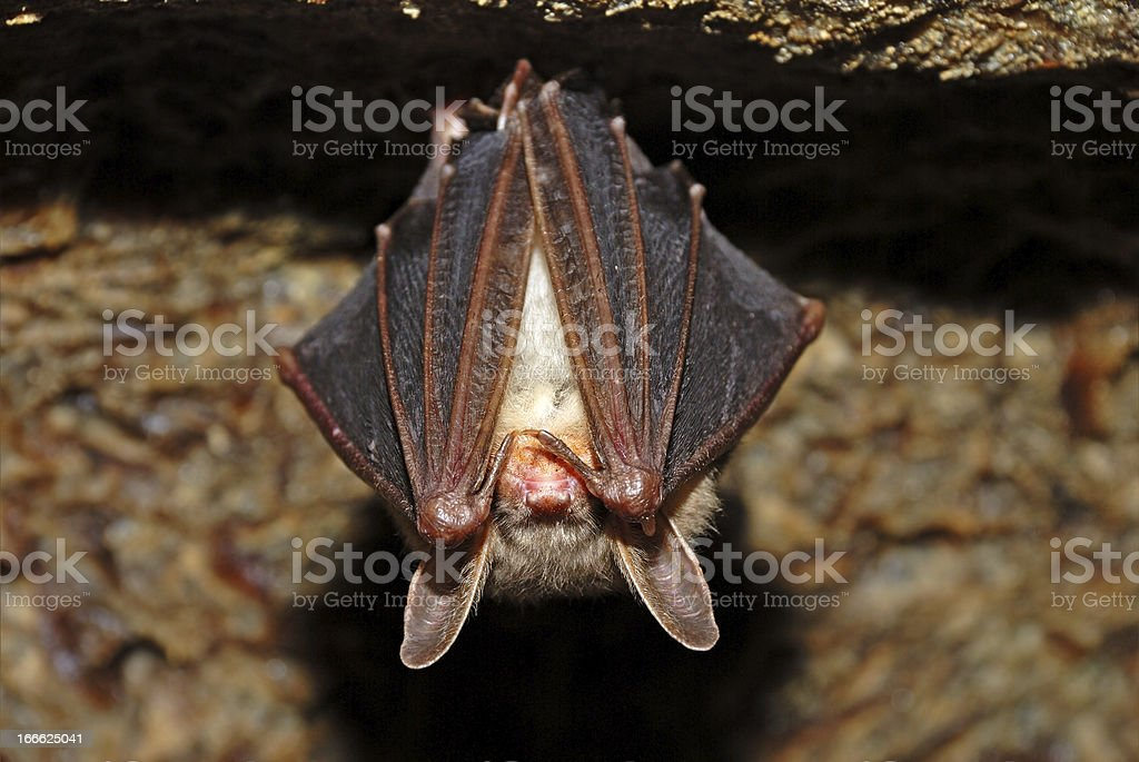Bat cave royalty-free stock photo