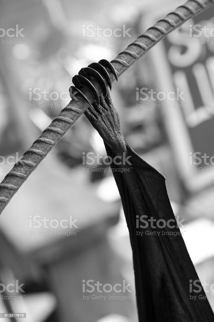 Bat claw black and white stock photo